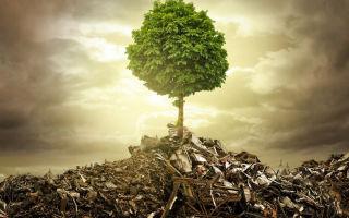 Экологические слоганы и призывы